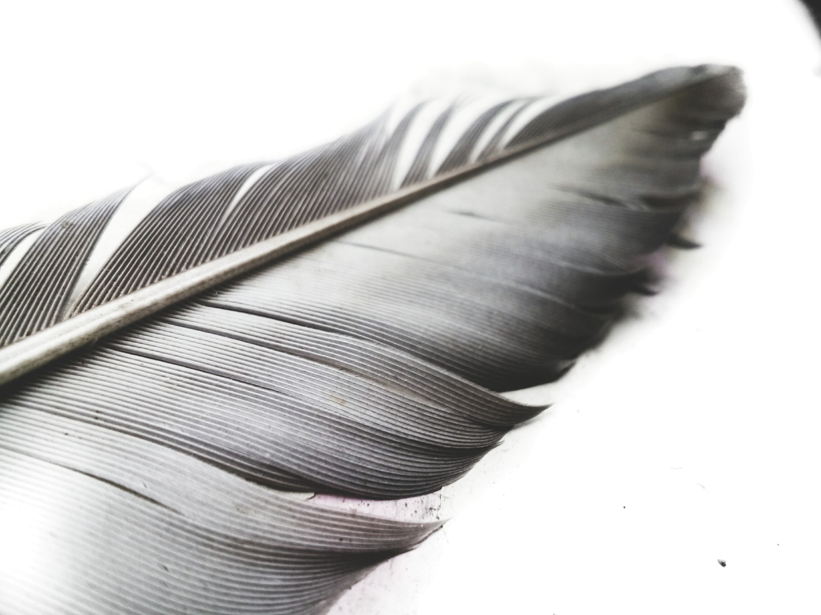 grayscale-photo-of-feather-1320724